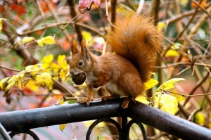 scoiattolo associazione alveare milano
